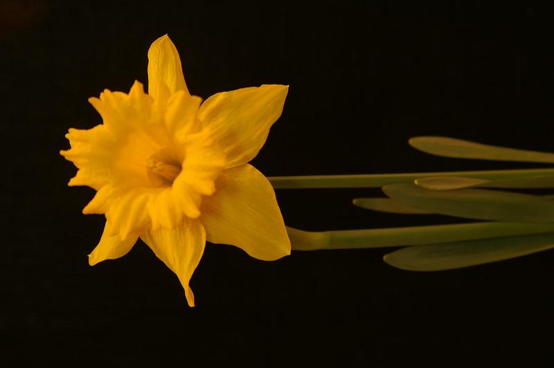 Yel Flower11.jpg