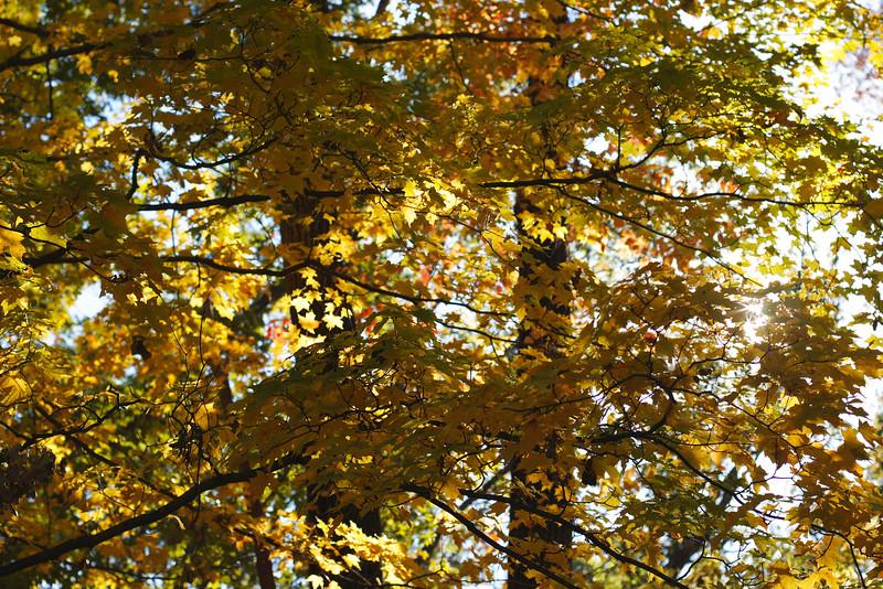 20081012-2008-10-1214-10-395863.jpg