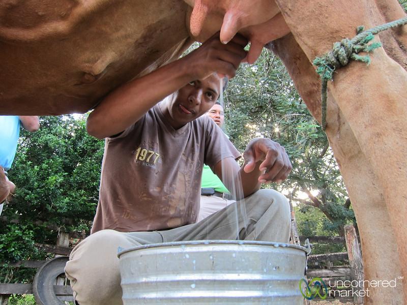 Ricardo Milks a Cow at Morgan's Rock Hacienda - Nicaragua