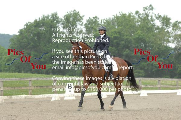 VADA NOVA Summer dressage show and Young Horse June 2013