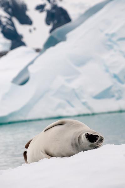 Antarctica 2015 (41 of 99).jpg