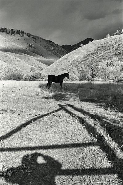 4-Horse-pasture-shadows.jpg