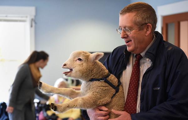 Holton Home Lamb Visit