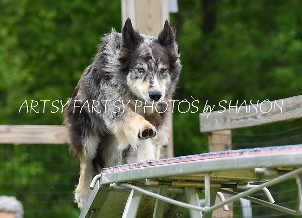 MASTERS - AGILITY