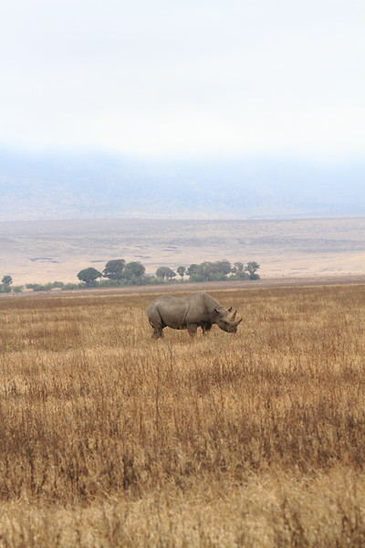 Rhino 5.JPG