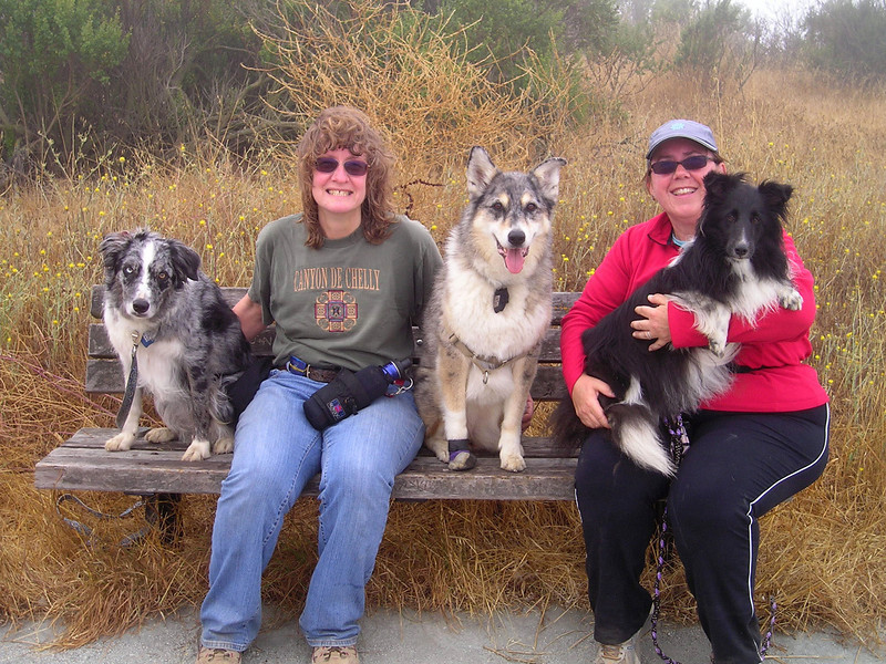 Boost, Ellen, Tika, Vici, and Finn. Success! With wisps of visible fog blowing around us in a chilly wind (welcome to July?!); dogs' fur is getting moist and our sweat is now a cold liability.