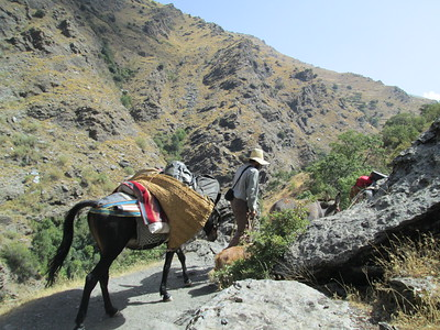 Trekking with Donkey Support Aug 2015