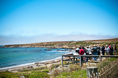 Elephant Seals Point Piedras Blancas