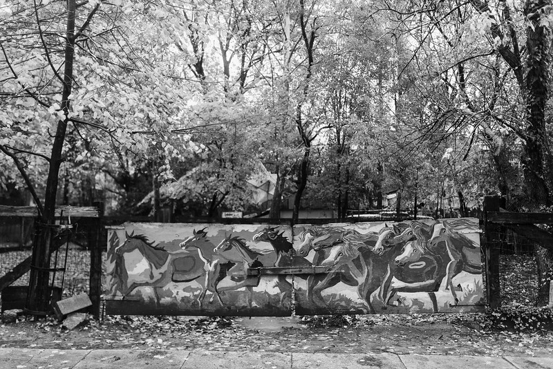 Baltimore -- Bango Square is where horses get to play and gallop. A local neighbor painted the horses on the front gate. Nov. 9, 2018.
