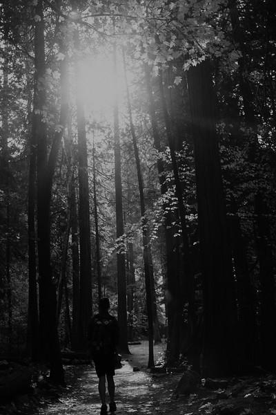 Forest_City_Photographs_Honeymoon_Califonia_San_francisco_Yosimite-153.jpg