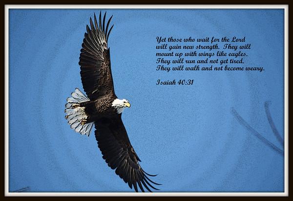 Eagle Creations