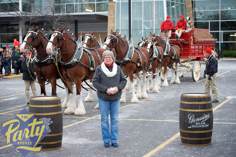 Clydesdale Portraits 47.jpg