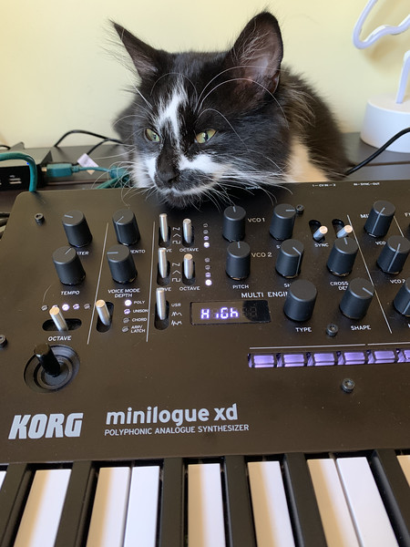 My cat on my synthesizer in my space
