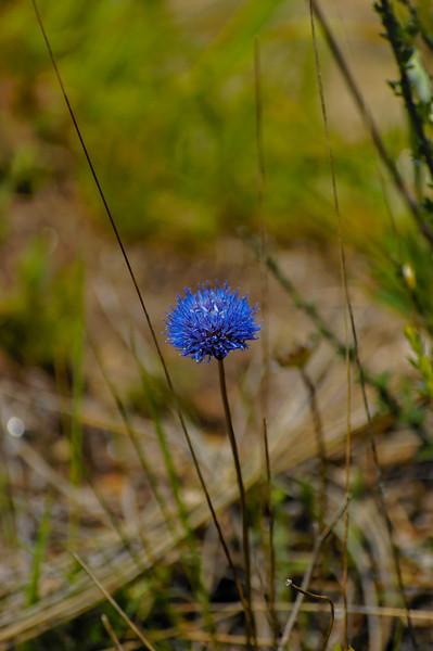 Vouzela-PR2 - Um Olhar sobre o Mundo Rural - 17-05-2008 - 7412.jpg