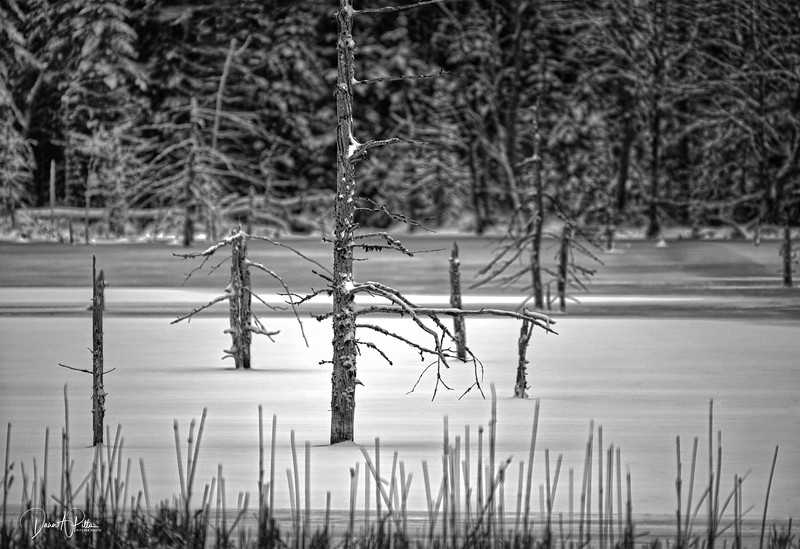 Lake Death BW-1