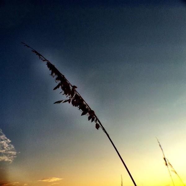 2011-09-11_1315744418.jpg