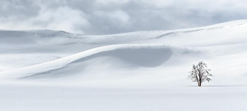 Yellowstone in the Winter