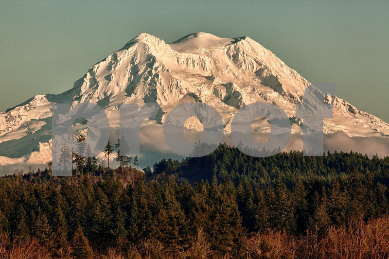 Mt. Rainier rises above a forested landscape on a winter afternoon just before sunset. 4675