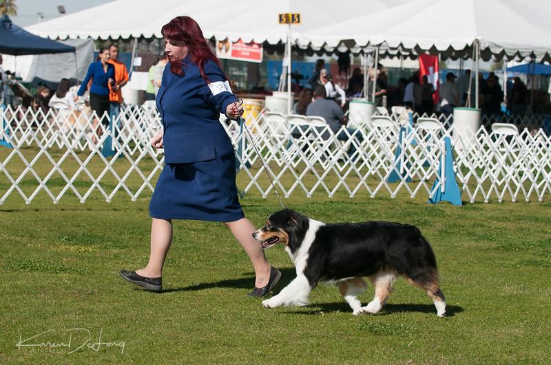 20170205_Australian Shepherds_Lost Dutchman Kennel Club-102.jpg