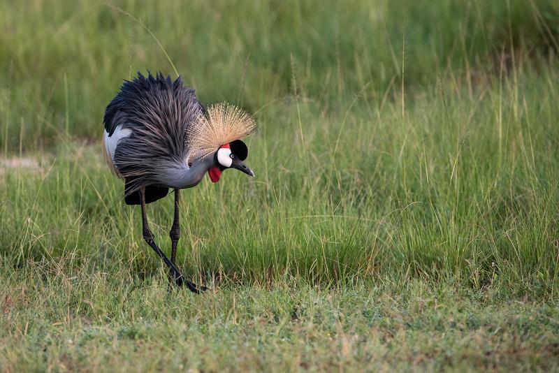 Uganda_T_QE-217.jpg