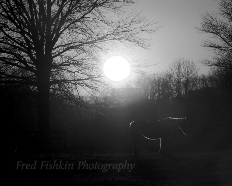 sunset horse bw.jpg