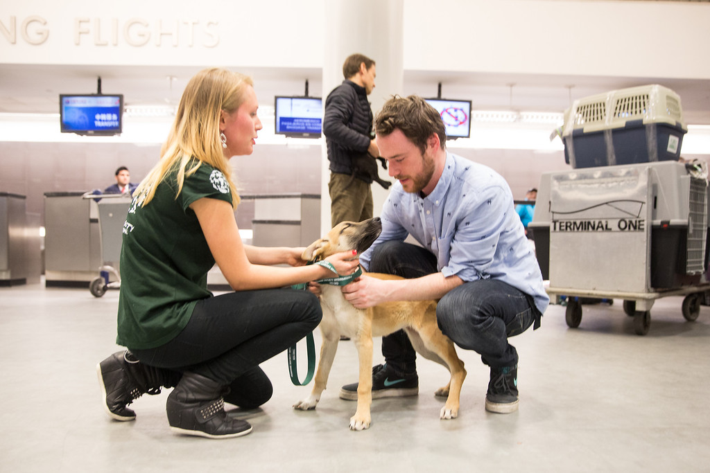 . In this image released on Friday, March 14, 2014, Robin Douglas Macdonald arrives at JFK international airport in New York with five dogs, adopted by Olympic silver medalist Gus Kenworthy. Humane Society International and The Humane Society of the United States have been working with Macdonald and Kenworthy for the past several weeks in trying to transport the dogs from Sochi, Russia, to the United States. Masha Kalinina, International Trade Policy Specialist at HSI, was waiting at the airport to greet them on Wednesday evening; MacDonald and the dogs were reunited with Kenworthy on Thursday. (Christopher Lane/AP Images for Humane Society International)