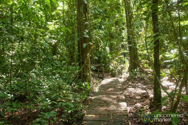 Rainforest Walk - Tortuguero, Costa Rica