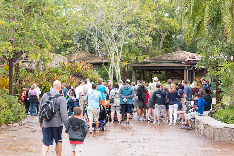 Low crowds at rope drop - Animal Kingdom Walt Disney World
