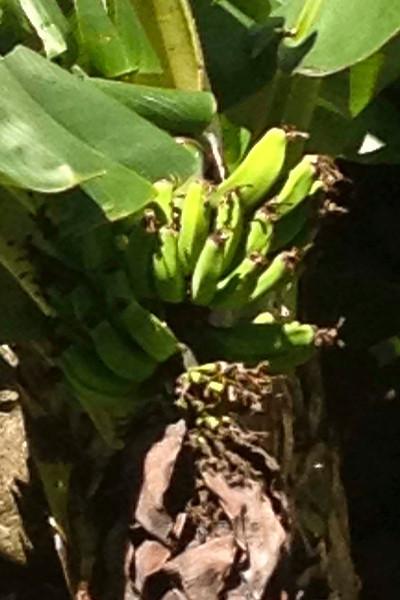 Maui 2012 Flora