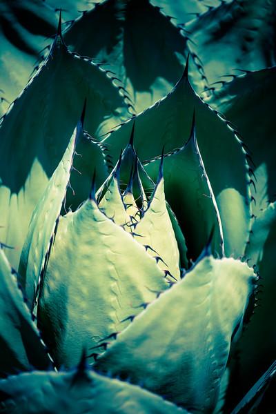Aloes in Wonderland