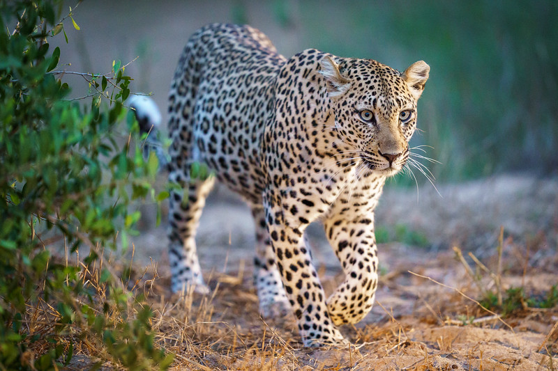 LeopardHills-20191029-2534.jpg