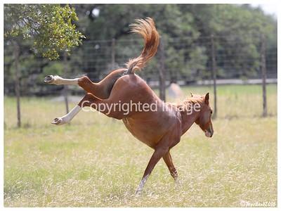 Bailey's Horses - 051518