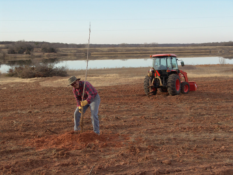 Planting first group of trees in our pecan orchard