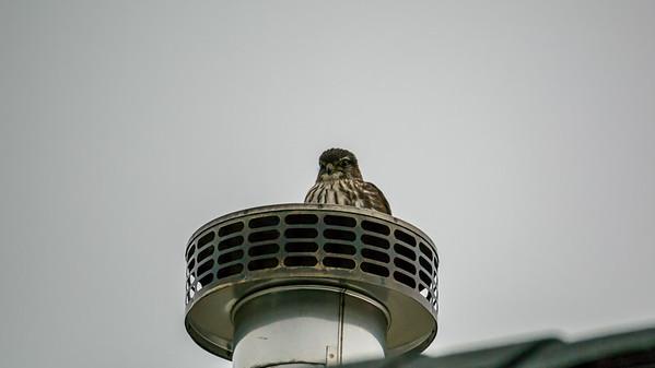Birds Harvard