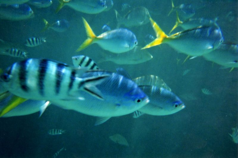 fish_2.jpg