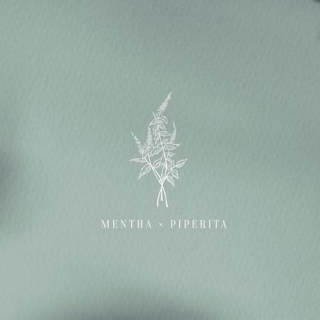 Mentha x Piperita