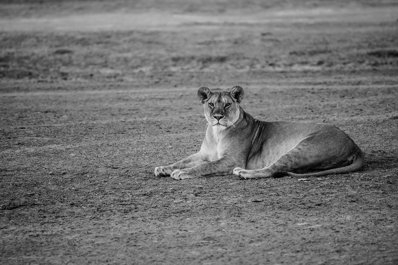 Tanzania_Feb_2018-112.jpg