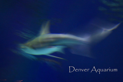 Denver-Downtown Aquarium 09