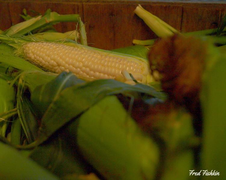 Terhune corn.jpg