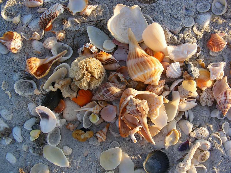 shell treasure trove