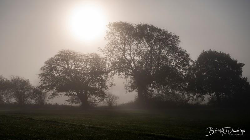 Hassocks in the mist-5361.jpg