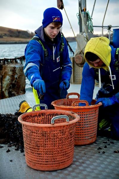 Mussels_Shot_1_384.jpg