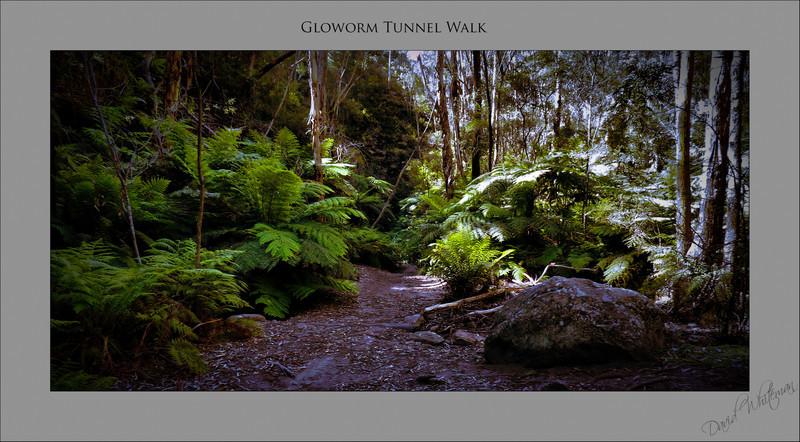 Glowworm Tunnel Walk