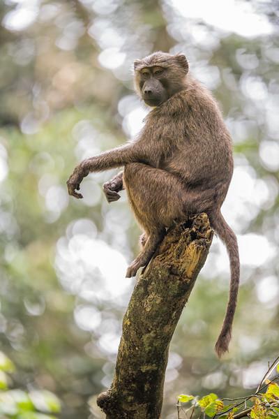 Uganda_T_Chimps-1470.jpg