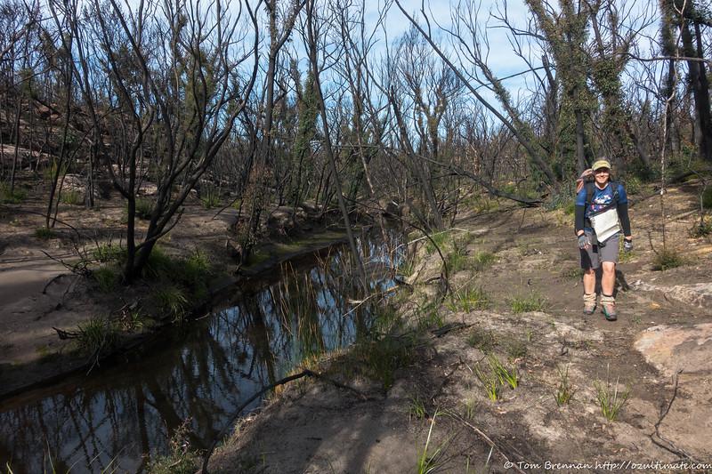 Easy going along Moore Creek