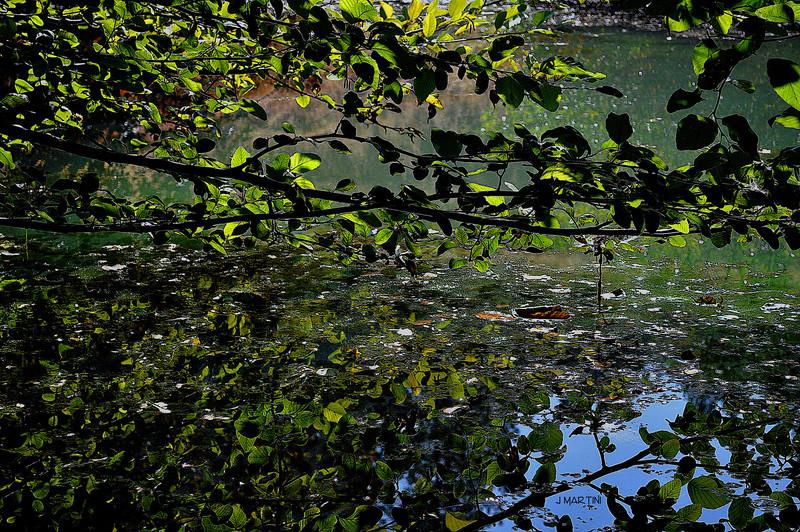 green pond 10-6-2009.jpg