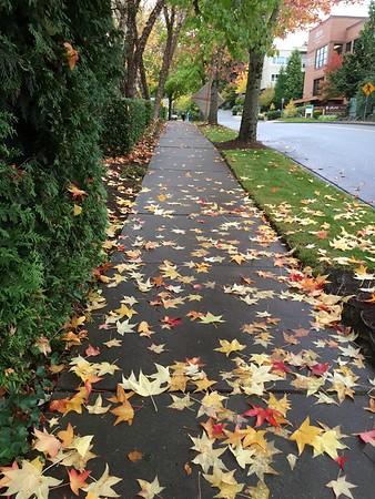 2015-10-29 Fall in Mill Creek