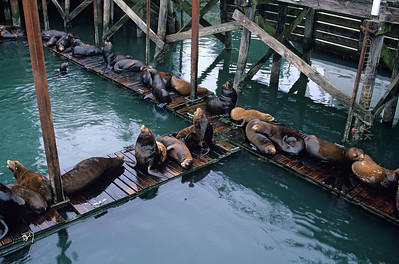 Oregon (coast): Pacific waves and sea lions