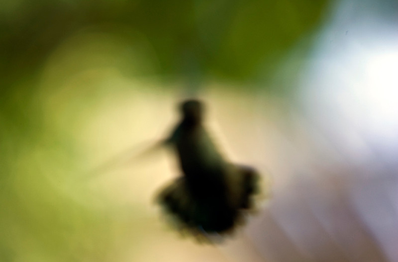 distorted_hummingbird.jpg