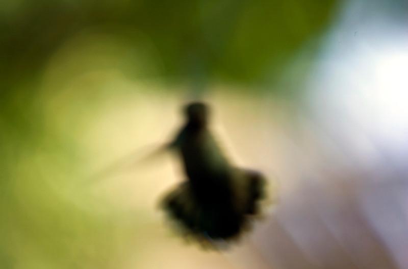 distorted_hummingbird.jpg